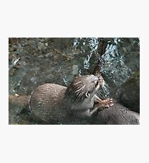 Otters - image 10 Photographic Print