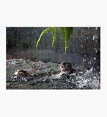 Otters - image 6 Photographic Print