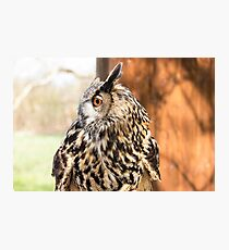 """Long Eared Owl - """"this is my best side"""" Photographic Print"""