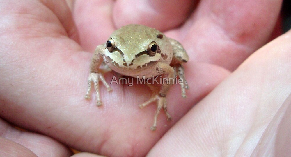 Pacific Tree Frog by Amy Scott