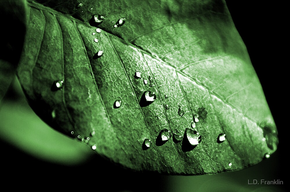 Memories Of The Rain by L.D. Franklin