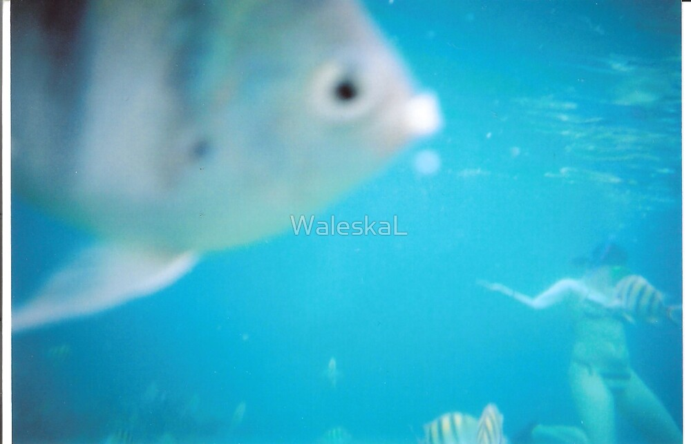 Caught the wrong bait by WaleskaL