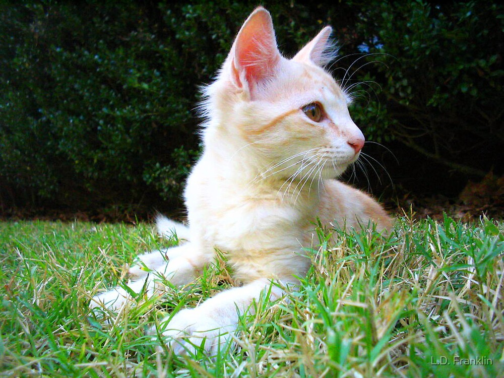 Kitty In The Grass by L.D. Franklin