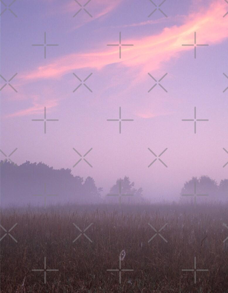 Lone Web by Bill Spengler