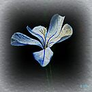 Blue by Scott Mitchell