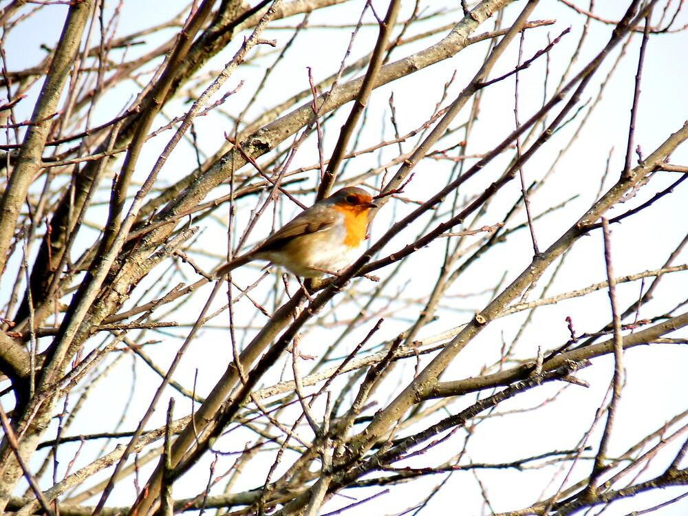 Birdie Larry by lukshot