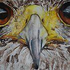 Hawk by lizdomett