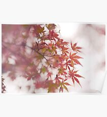 Artistic closeup of Japanese maple red leaves in autumn fog art photo print Poster