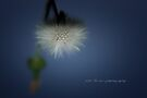 Dandelion Float © Vicki Ferrari Photography by Vicki Ferrari
