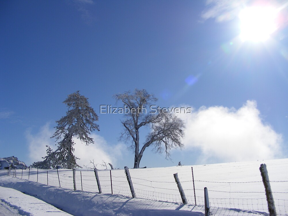 Stark Cold by Elizabeth Stevens