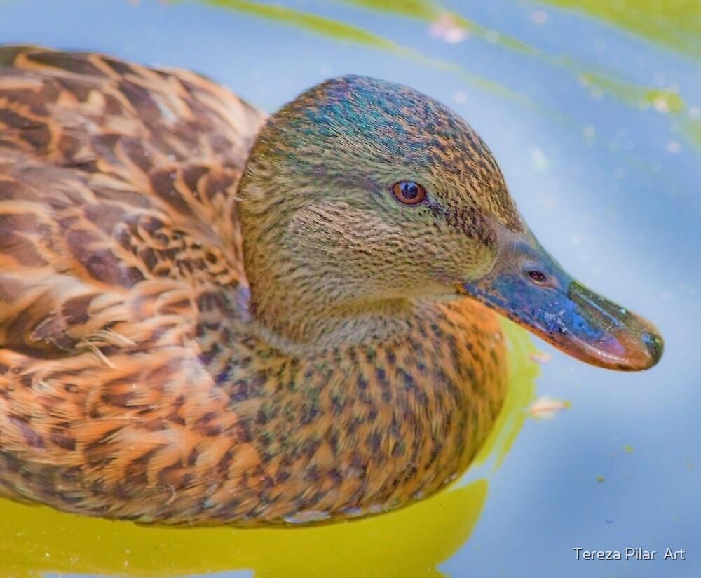 duck portrait by terezadelpilar ~ art & architecture