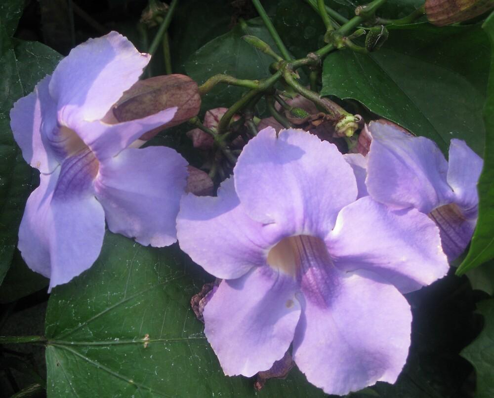 Purple Flower by Dswatercolors