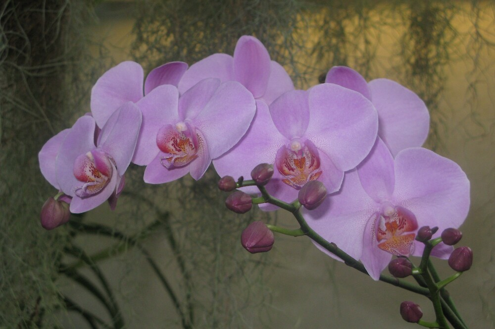 Purple Orchid by Dswatercolors