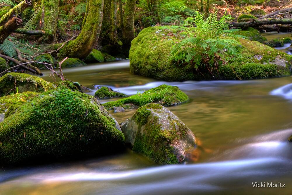 Taggerty River Fern by Vicki Moritz