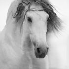 white andalsuian horse in high key by olgaitina