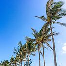 Palm Trees, Blue Sky by Southern  Departure