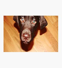 puppy Photographic Print