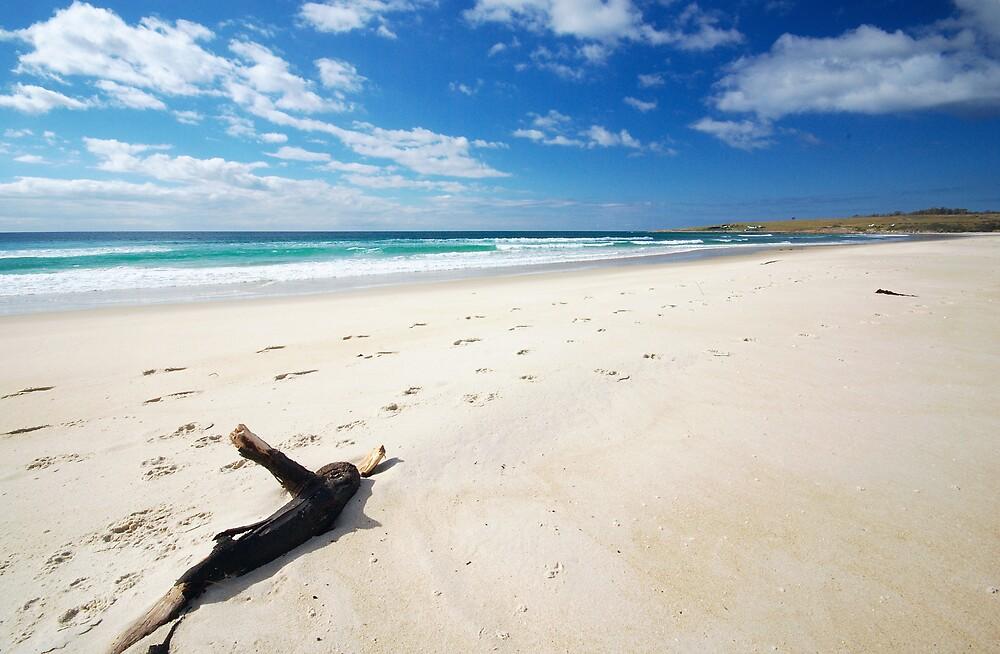 4 Mile Beach, Tasmania by groophics