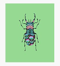 Cute Ornamental Insect Photographic Print