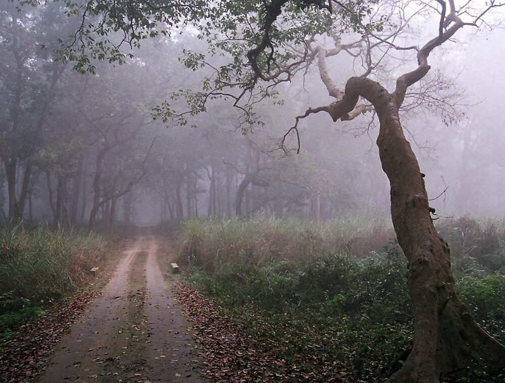 Jungle path by Arnab Mukherjee