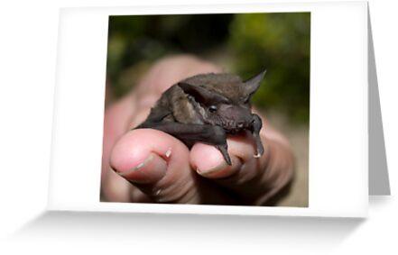 Bats of the Night....  by Paul Davis