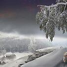 Snowy Stroll by Igor Zenin