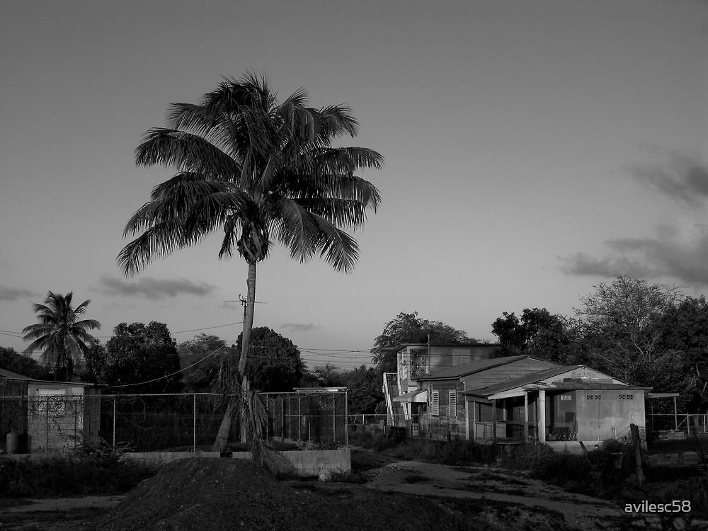 Palm tree by avilesc58