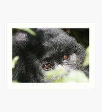 Gorilla Eyes Art Print