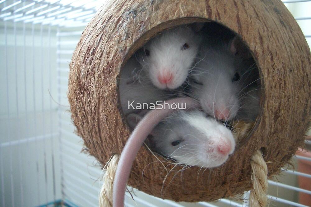 Crowded coconut by KanaShow