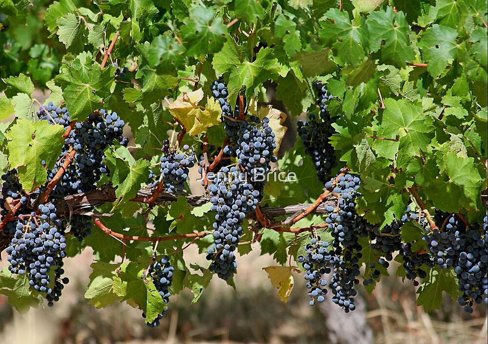 Fruit Of The Vine by Jenny Brice