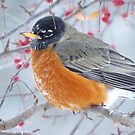 January Robin by lorilee