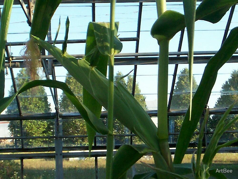 Long cob of corn by ArtBee