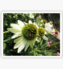 End of Summer Echinacea Sunrise Sticker