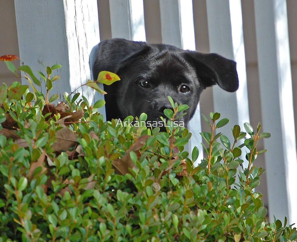 Peek-A-Boo by ArkansasLisa