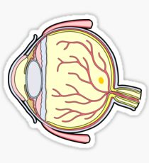 Human Eye Anatomy Illustration Sticker