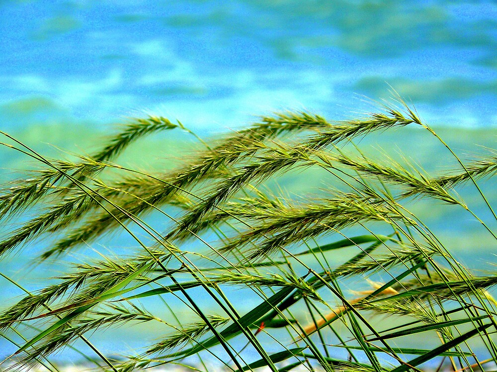 Summer Breeze by carolethajer