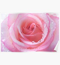 Cool Candy Rose Poster