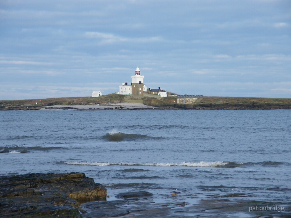 Coquet Island by pat oubridge