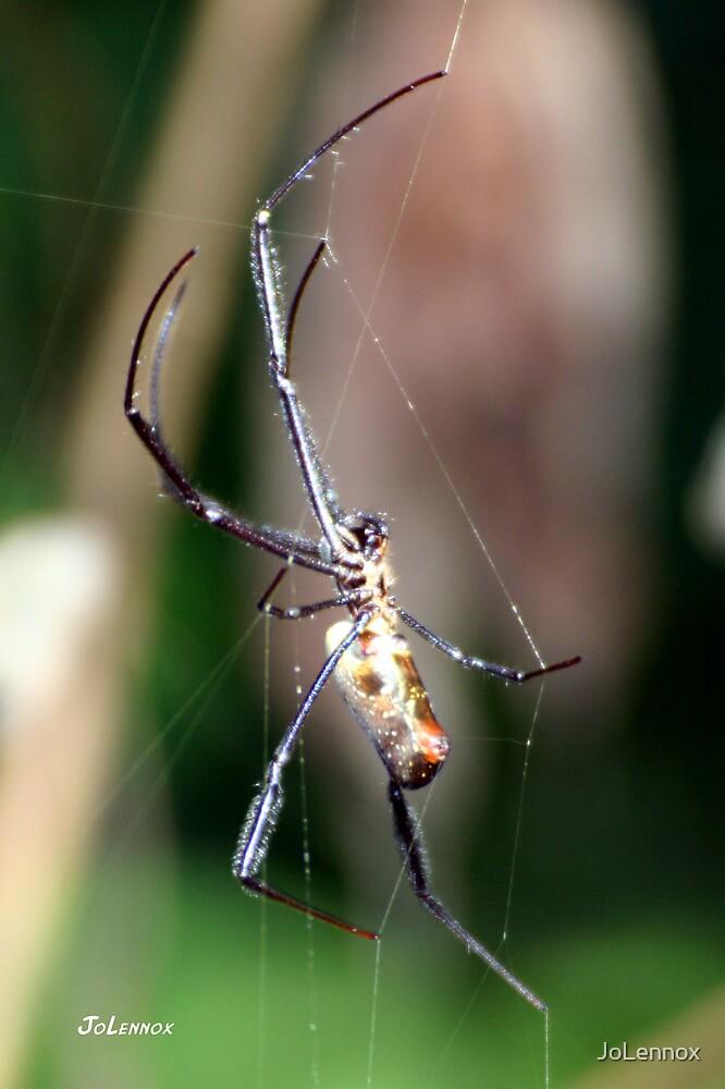 Spider by JoLennox