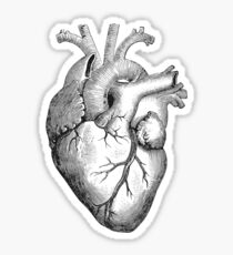 human heart drawing: stickers | redbubble, Muscles
