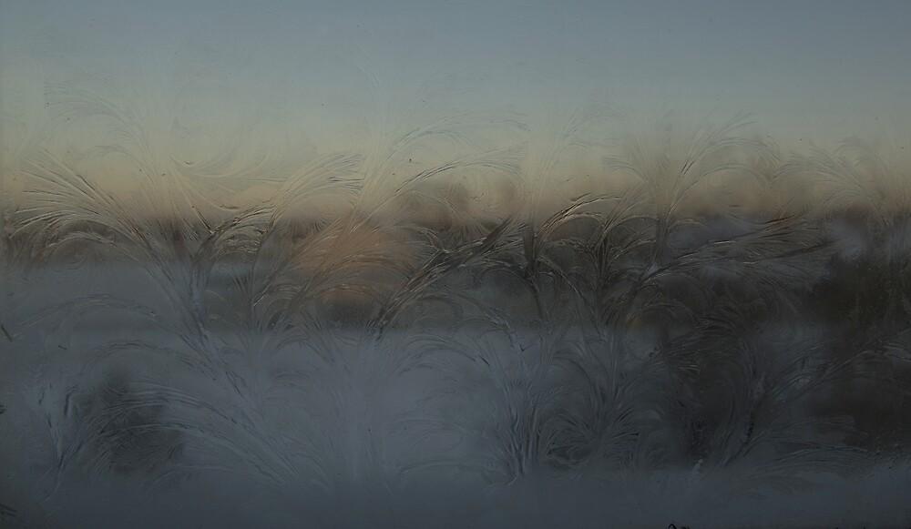 Roses of ice  by Gaz Gazmajster