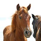 Wild Horses by Karl R. Martin