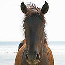 Wild Horse by Karl R. Martin