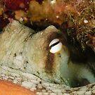 Sydney Octopus by Andrew Trevor-Jones