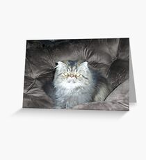 Sitting Handsome Greeting Card
