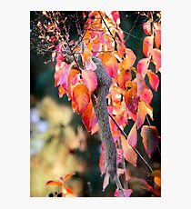 Squirrel feasting on a fall day. Photographic Print