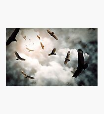 Circling Vultures Photographic Print