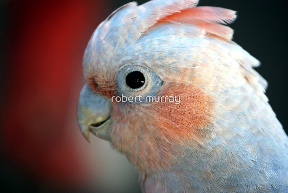 I' watching you by robert murray