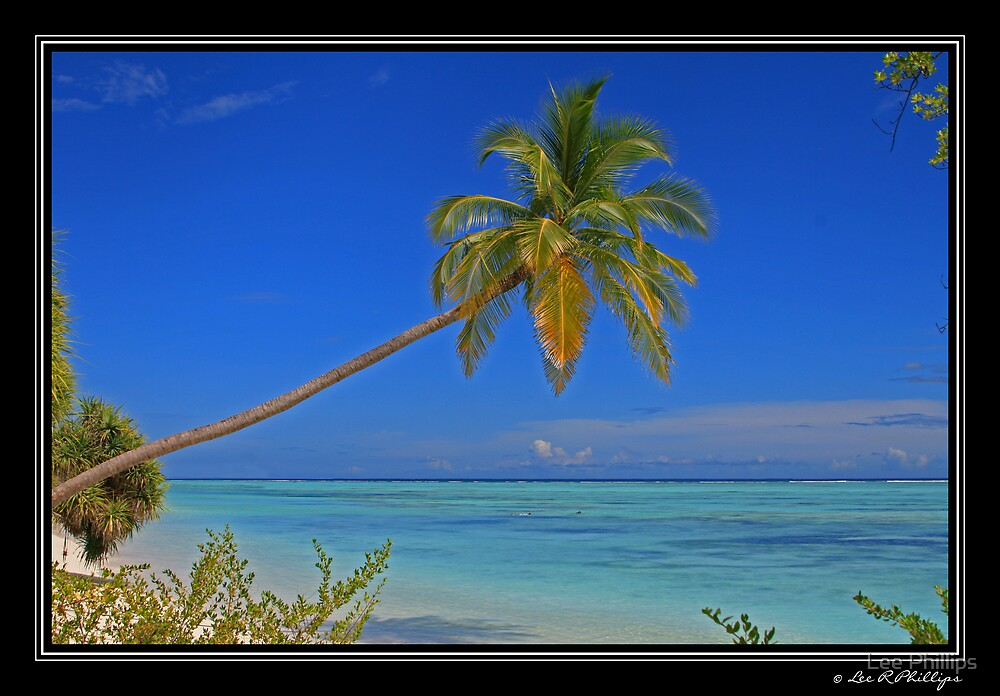 Paradise Palm by Lee Phillips