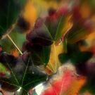 Fall Colors by PeggySue67